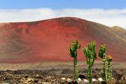 Lanzarote - laavaperäinen unelmasaari