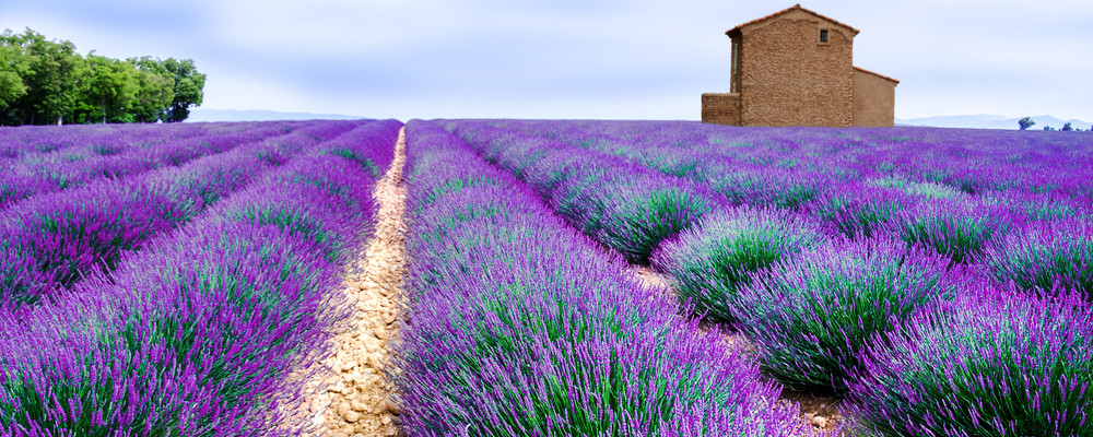 Nizza laventeli